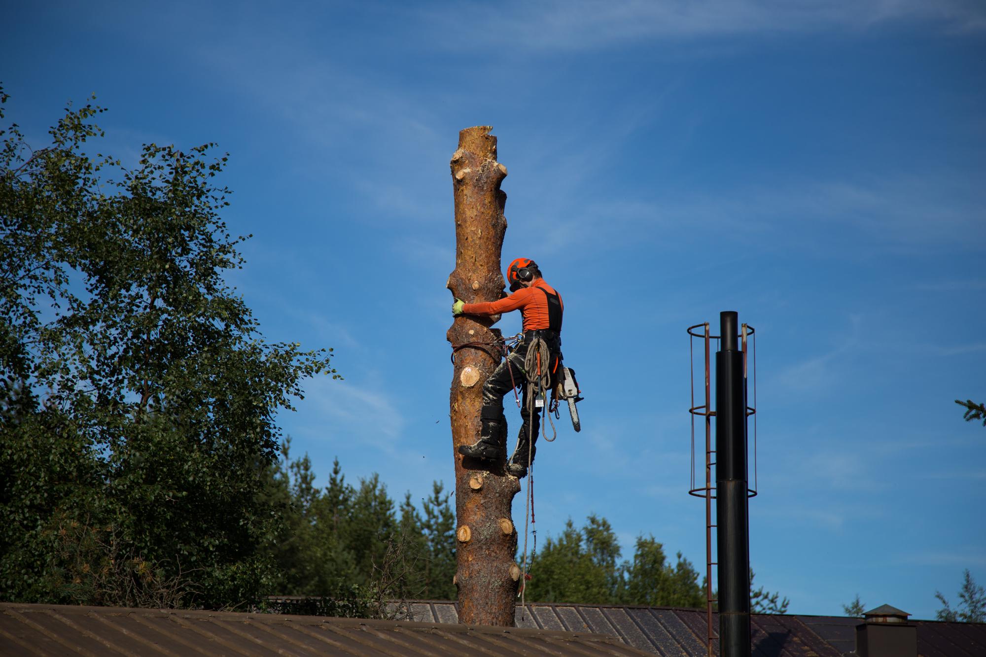 Puunkaato Rovaniemi